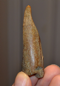 A rare Upper Palaeolithic - Mesolithic period carved and polished Bone Awl / Burin from Kent. SOLD
